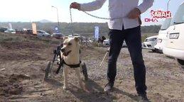 Engelli köpeği sahiplenerek yurtdışından yürüteç getirttiler