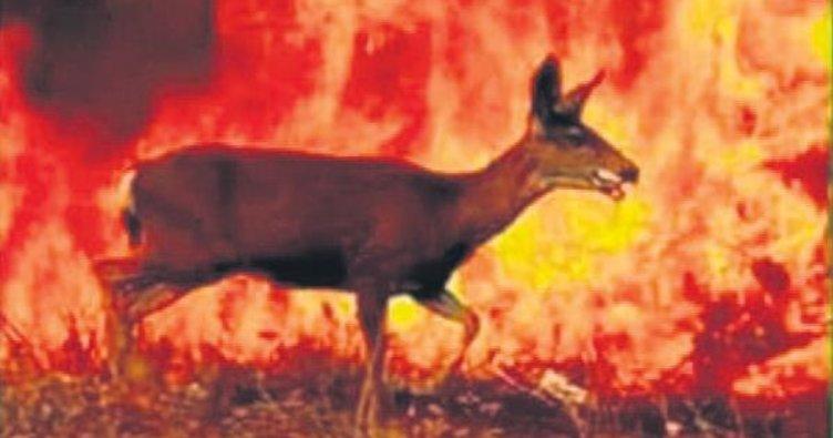 'Dersim yanıyor' fotoğrafı Tunceli'ye ait değil