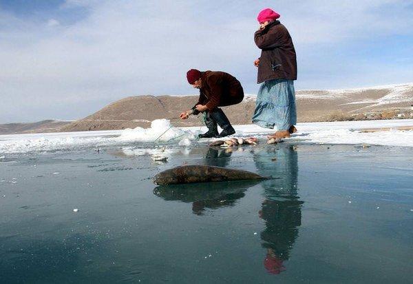 Çıldır'da Eskimo usulü balık avı