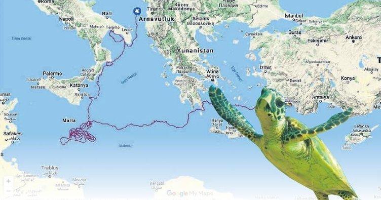 'Caretta Tuba'dan bir yılda 5.500 km