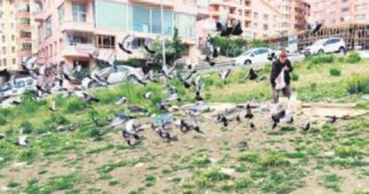 85 yaşında yüzlerce güvercin besliyor