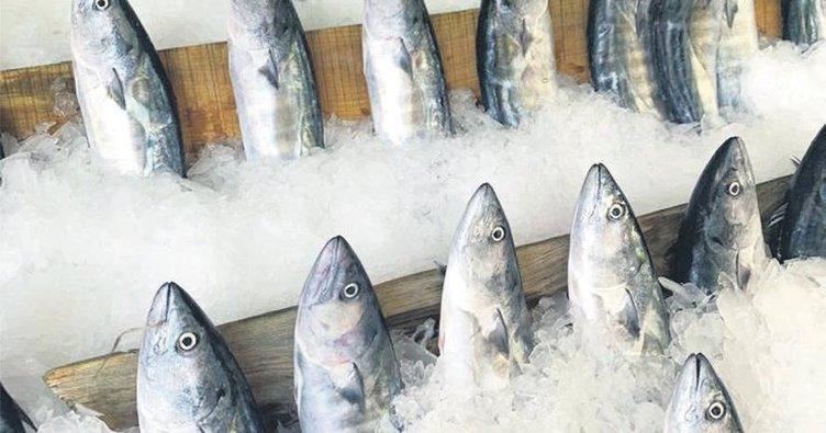 Balık bol fiyat uygun