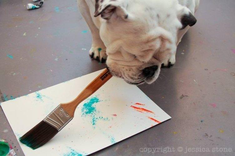 Tek gözlü ressam köpek