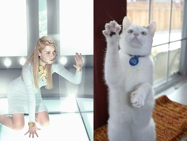 Taklitçi kediler
