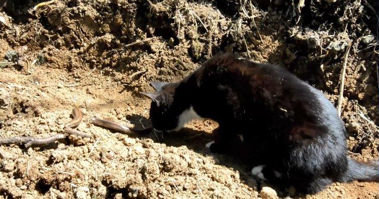 Fare avcısı ilk defa gördüğü yılandan korktu
