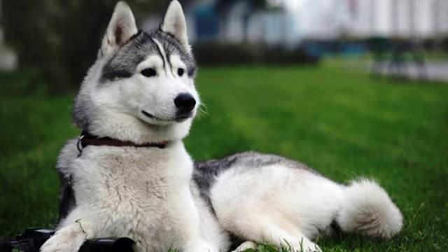 En tehlikeli 25 köpek ırkı