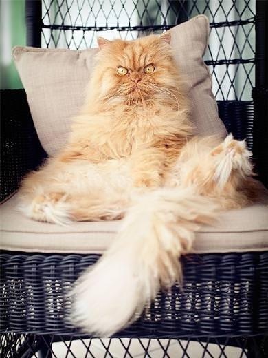 Kızgın Kedi Garfi' nin Maceraları