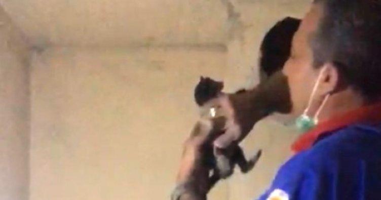 4 gün bacada mahsur kalan yavru kediyi, itfaiye kurtardı