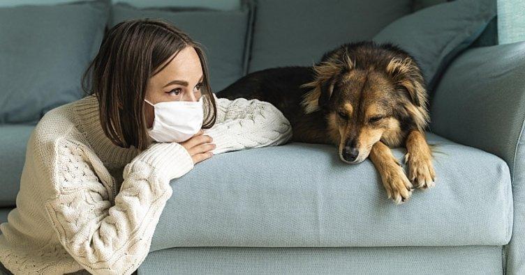 DSÖ, koronavirüsün insanlardan hayvanlara bulaşma ihtimalini doğruladı