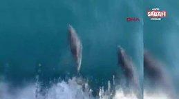 Tekirdağ'da yunusların balıkçı teknesiyle yarışı kamerada | Video