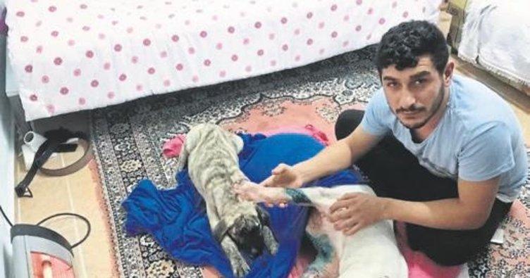 Köpeğe satırla saldırı iddiası