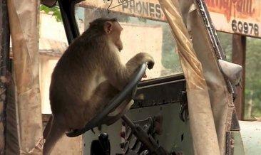 Rüyada maymun görmek ne anlama gelir? Rüyada maymun görmenin yorumu – Rüya tabirleri