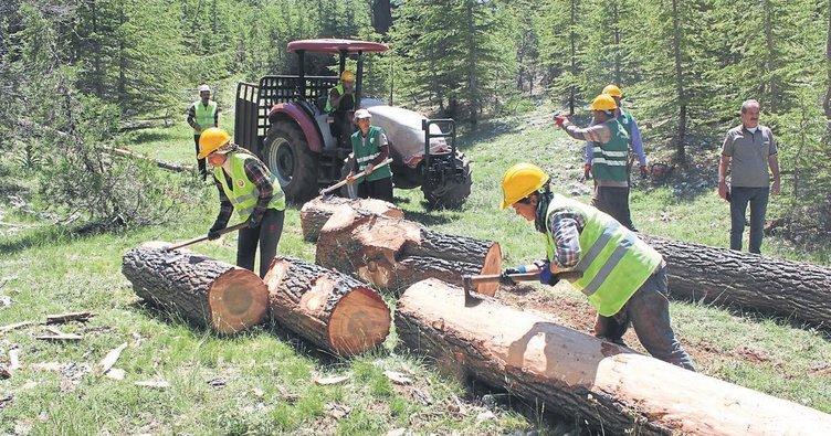 Orman köylüsünün kadın çalışanları