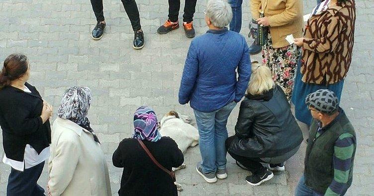 Hastane önünde bayılan köpeğe yardıma koştular