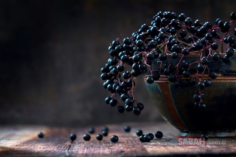 Vücudu çelik gibi yapan kara mürver faydalarıyla şaşırtıyor!