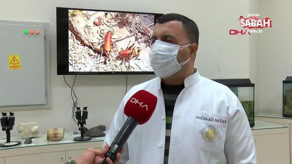 Son dakika: Türkiye'ye flaş çekirge istilası uyarısı!  O bölgelerimizdeki çekirge yumurtaları... | Video