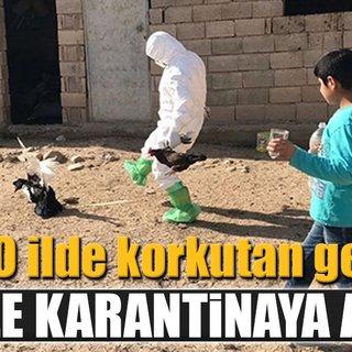 Mardin'de kuş gribi paniği