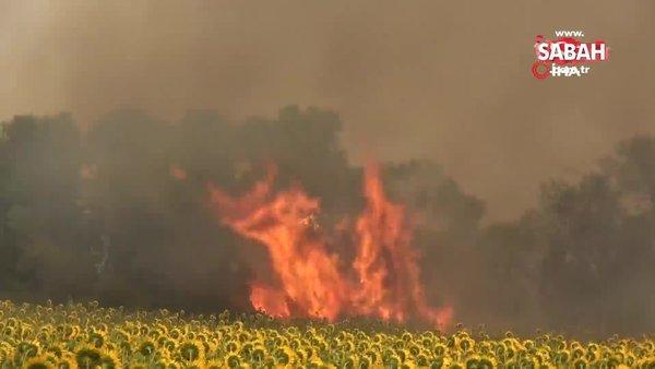 Son dakika! Gelibolu'daki yangını söndürme çalışmaları devam ediyor | Video