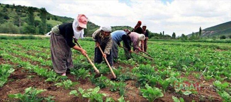 İkinci bahar paketi geliyor! 50 bin çiftçiyi ilgilendiriyor...
