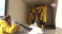 Marmara Denizi açıklarında dev 'Kılıç Balığı' yakalandı | Video
