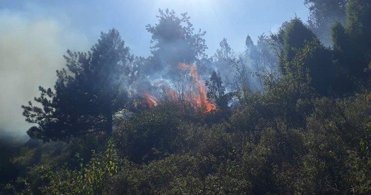 Askeri alandaki ormanda yangın