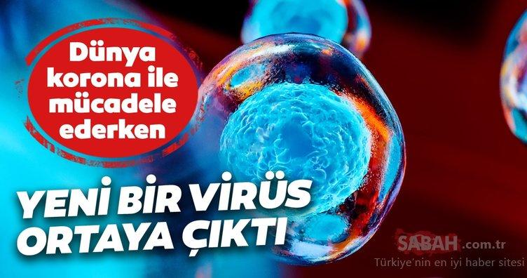 Son dakika haberi: Corona virüs Covid-19 vaka sayısıyla mücadele ediliyordu! Yeni bir grip virüsü ortaya çıktı