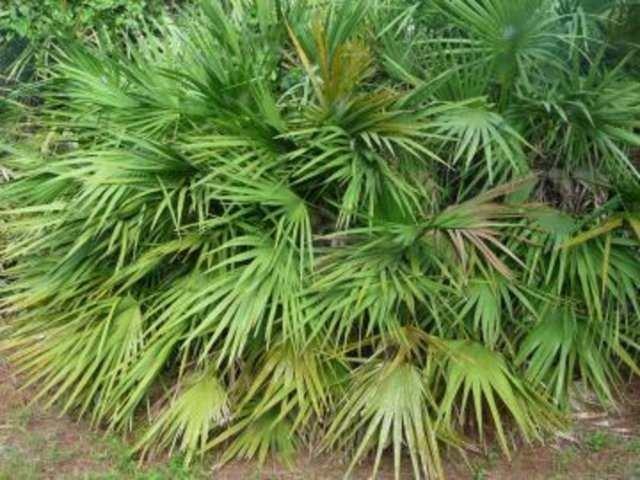 Bu bitkiler aslında şifalı değil!