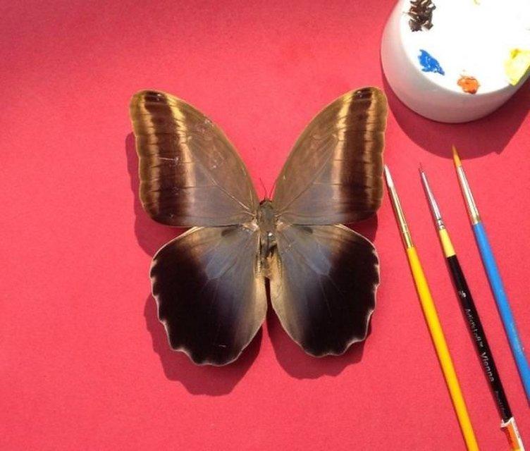 Gercek Kelebek Kanatlarina Cizilen Goz Alici Yagli Boya Resimleri