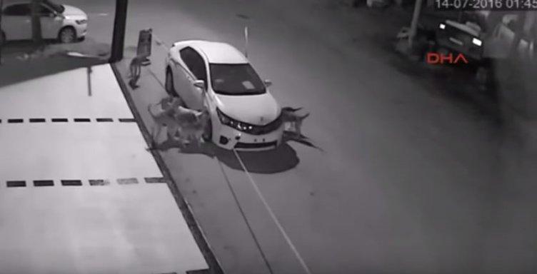 Araba parçalayan köpeklerin gerekçesi İNTİKAM olabilir