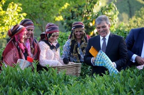 Cumhurbaşkanı Gül, Rize'de çay topladı