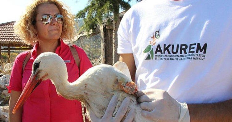Afyonkarahisar'da tedavisi tamamlanan akbaba ve pelikanlar doğaya salındı