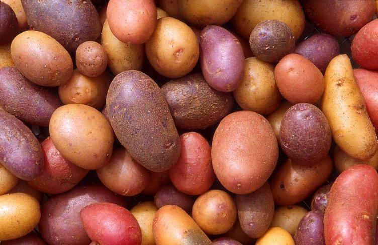 Sebzeler nereden geldi?