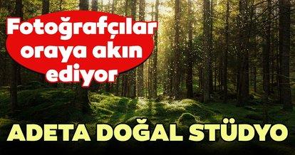 Sarıçam ormanları, doğal stüdyo oldu