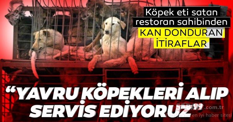 SON DAKİKA HABER: Köpek eti satan restoran sahibinden kan donduran sözler: Yavru köpekleri servis ediyoruz
