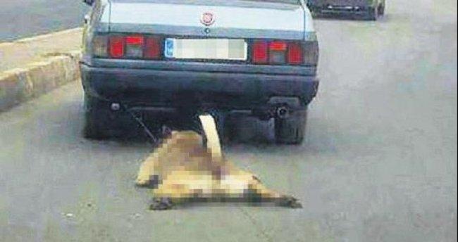 Köpeğe arabalı işkenceye gözaltı