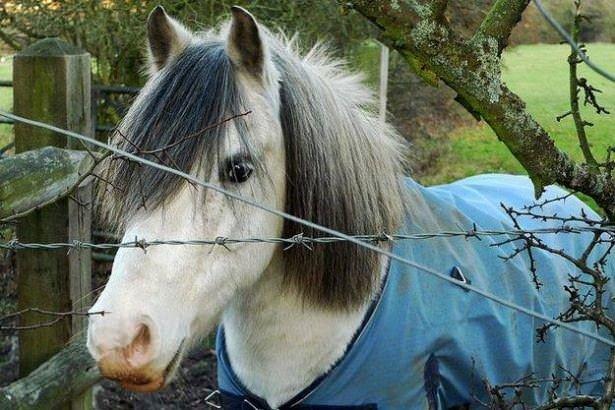 Atların kıskandıran saç modelleri