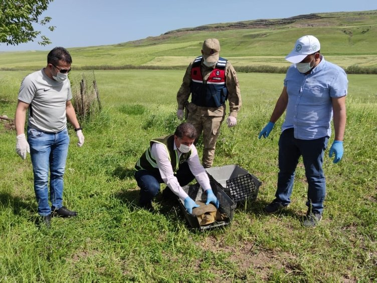 Jandarma, nesli tükenmekte olan 'Fırat kaplumbağası' buldu