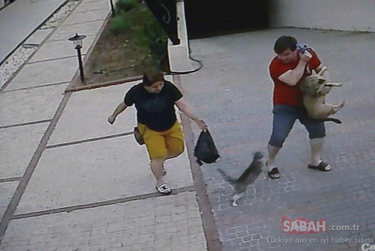 Köpeklerine saldıran kediyi gören çift ne yapacağını şaşırdı