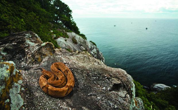 Dünyanın en tehlikeli adası