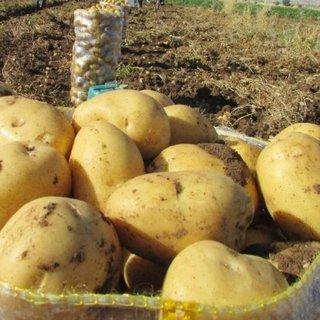 Yükselen patates fiyatlarına müdahale