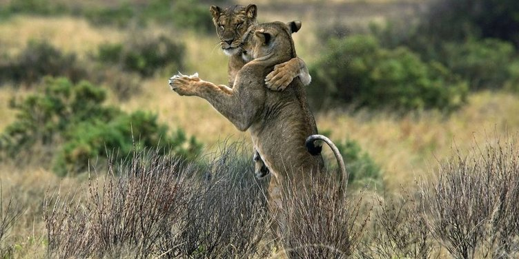 Sevimli hayvanların çok enteresan hareketleri