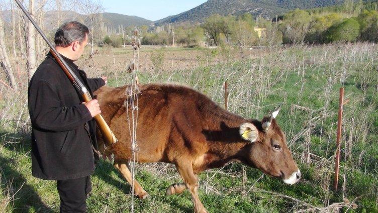 Fransa'dan yatırım için geldi, dönemeyince hayvan otlatmaya başladı