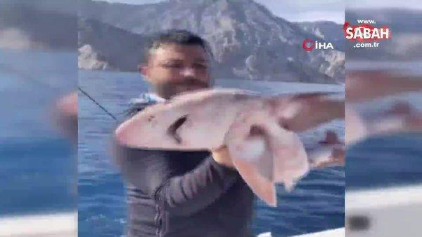 Balıkçıların oltasına 1,5 metrelik köpek balığı takıldı   Video