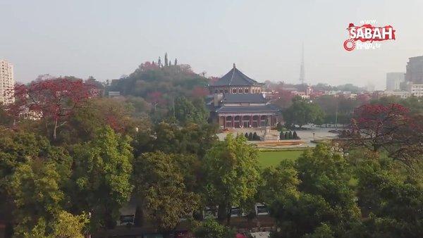 Çin'de 350 yıllık kapok ağacından kartpostallık görüntüler | Video