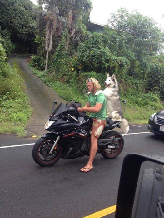 Trafikte birbirinden garip görüntüler