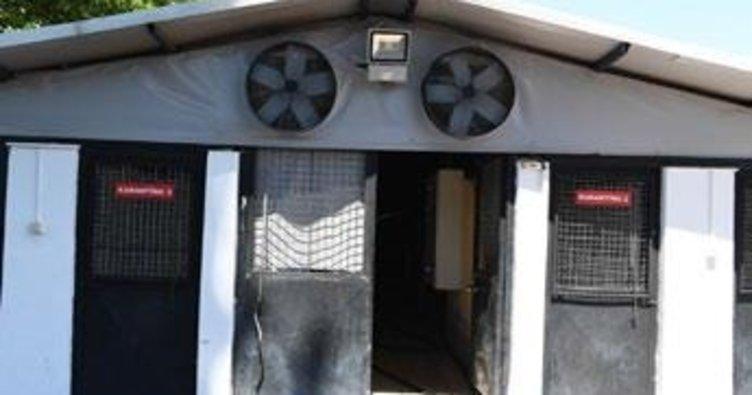Barınaktaki hayvanlar için özel hizmet