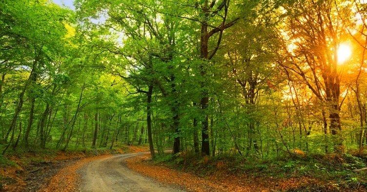 Belgrad Ormanı nerede? Belgrad Ormanına nasıl gidilir?