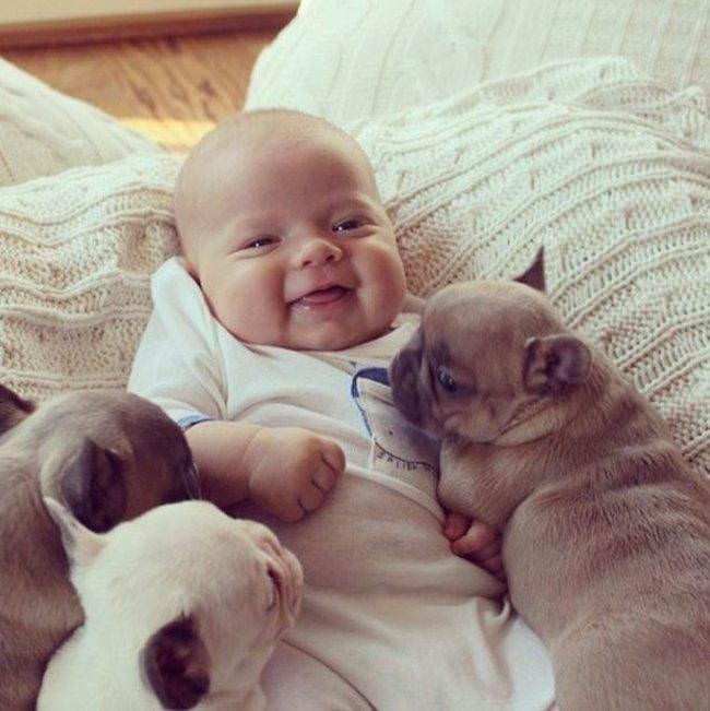 Bu köpekler çok tatlı