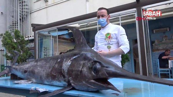Edirne Saros Körfezi'nde yakalanan dev kılıç balığı kamerada