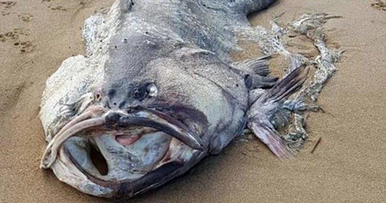 Avustralya'da gizemli bir deniz yaratığı